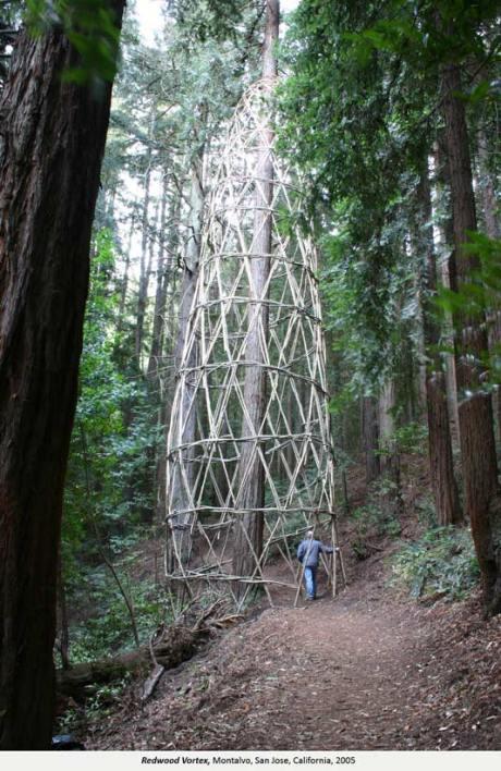 Redwood Vortex