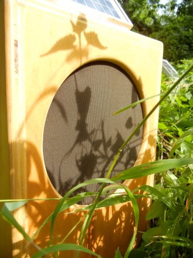 SunBoxes_grass